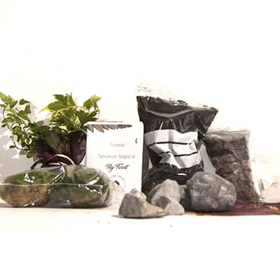 kit terrarium big forest le coin jardin