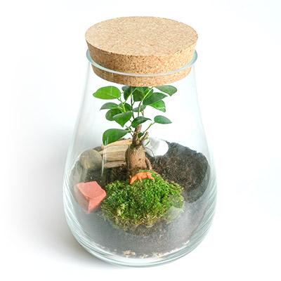 kit terrarium plantes en verre avec bonsai
