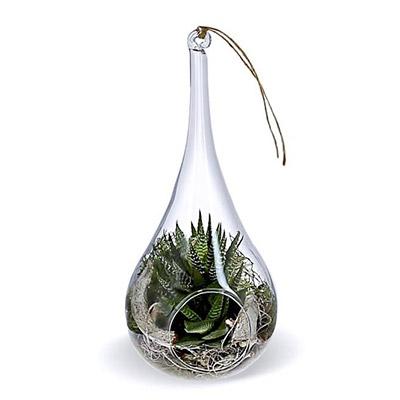 terrarium en verre goutte d'eau